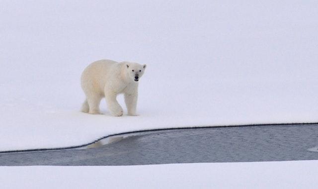 Nanoq-museo on saanut nimensä jääkarhun mukaan